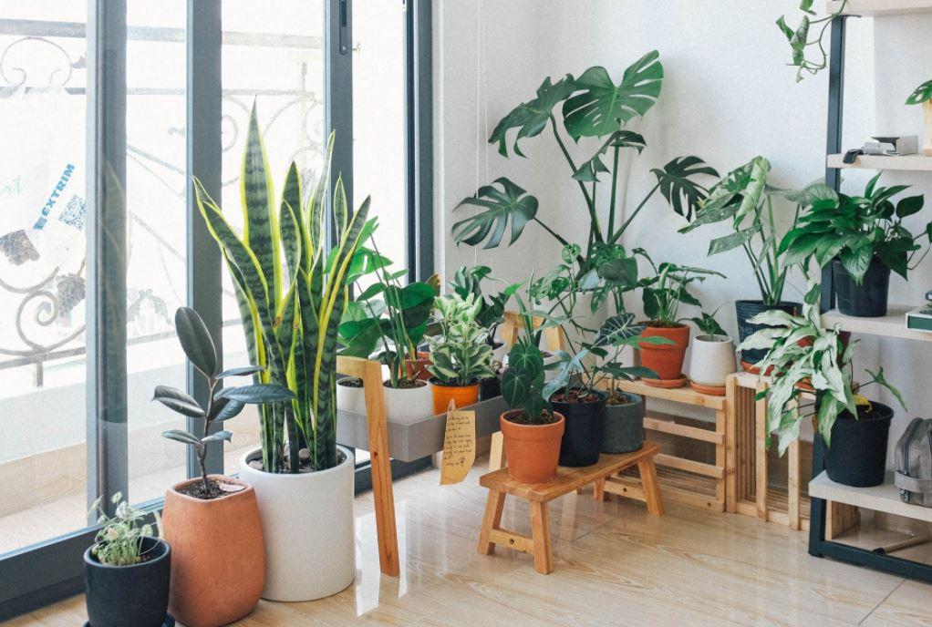 Blumenkübel für die Wohnung
